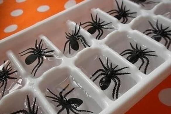 spider-ice